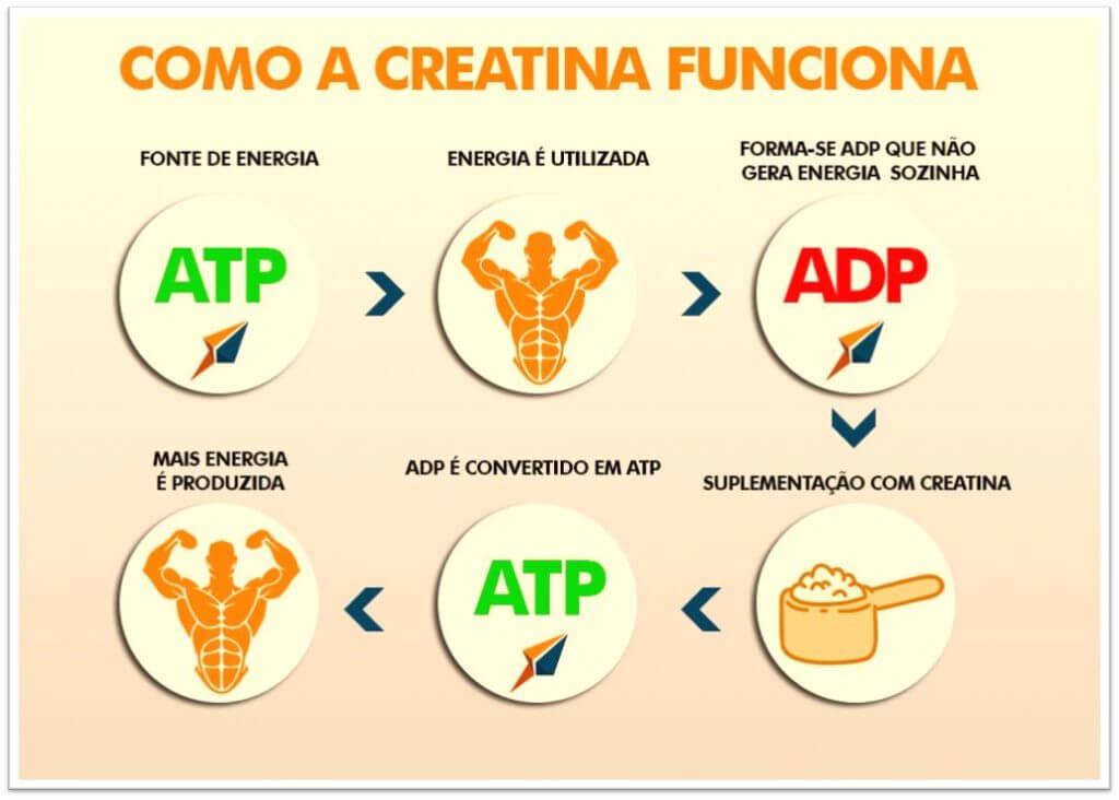 Ciclo da Creatina e Produção de Energia